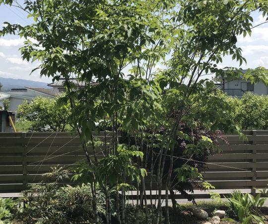 人気の庭園樹